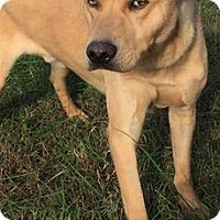 Adopt A Pet :: Thunder - Hatifeld, PA