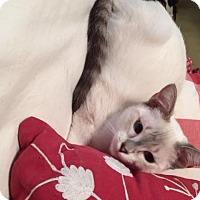 Adopt A Pet :: Louise - San Antonio, TX