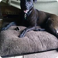 Adopt A Pet :: Juju Bean - Lewisville, IN