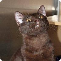 Adopt A Pet :: Guinness @ Roswell Petsmart - McDonough, GA