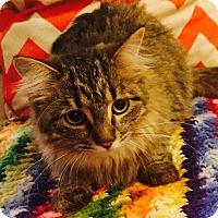 Adopt A Pet :: Milana - Addison, IL