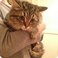 Adopt A Pet :: Natasha 2 - Fresno, CA