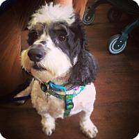 Adopt A Pet :: Stanley - Memphis, TN