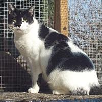 Adopt A Pet :: Rembrandt - Elk Grove, CA