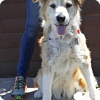 Adopt A Pet :: Eleonor is A PRIZE! - Los Angeles, CA