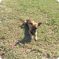 Adopt A Pet :: Chloe - Clermont, FL