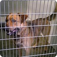 Adopt A Pet :: SAMSON - Terre Haute, IN