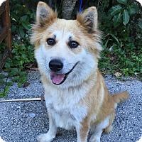 Adopt A Pet :: Portia - Ocean Ridge, FL