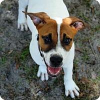 Adopt A Pet :: Lulu - Bradenton, FL