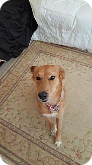 Golden Retriever Mix Dog for adoption in Alpharetta, Georgia - EdithAnne