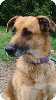 German Shepherd Dog Dog for adoption in Durango, Colorado - Timber