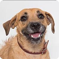 Adopt A Pet :: Veevee - San Luis Obispo, CA