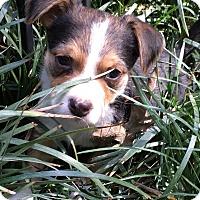 Adopt A Pet :: River (ETAA) - Harrisonburg, VA