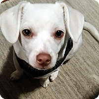 Adopt A Pet :: Dobby ~Courtesy Post~ - Youngsville, NC