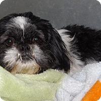 Adopt A Pet :: Princess - Orleans, VT