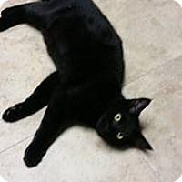 Adopt A Pet :: Darcy - Troy, MI