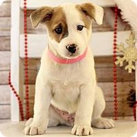 Adopt A Pet :: Tessa - Waldorf, MD