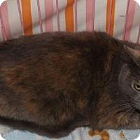 Adopt A Pet :: Janis Joplin - Orleans, VT