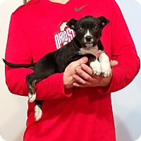 Adopt A Pet :: Treasure - South Euclid, OH
