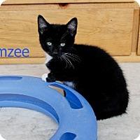 Adopt A Pet :: Kimzee - Polson, MT