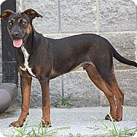 Adopt A Pet :: Prince Polo (In New Eng) - Brattleboro, VT