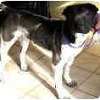 Adopt A Pet :: Lily - Bethesda, MD