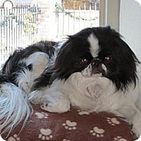 Adopt A Pet :: Yoyo - Aurora, CO