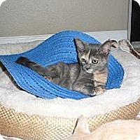 Adopt A Pet :: Smudgie - Modesto, CA
