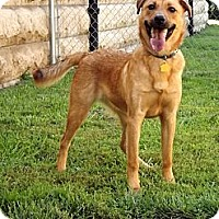 Adopt A Pet :: Winston - Fort Riley, KS