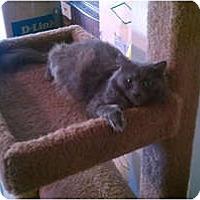 Adopt A Pet :: Nala - Laguna Woods, CA