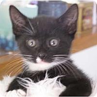 Adopt A Pet :: Panther - Port Republic, MD