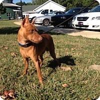 Adopt A Pet :: John - Greenville, SC