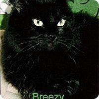 Adopt A Pet :: Breezy - Medway, MA