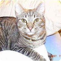 Adopt A Pet :: Jasper - Quincy, MA
