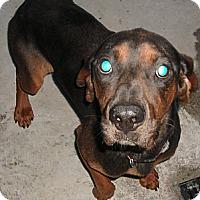 Adopt A Pet :: BENJAMIN - Coudersport, PA