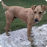 Adopt A Pet :: Jake - Brattleboro, VT
