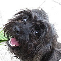 Adopt A Pet :: Merlin! - St Petersburg, FL