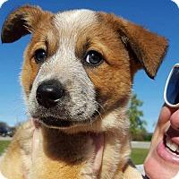 Adopt A Pet :: Fozzie - Huntsville, AL