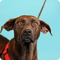 Adopt A Pet :: Suzie - Carlisle, TN