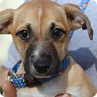 Adopt A Pet :: Nina - Locust Fork, AL