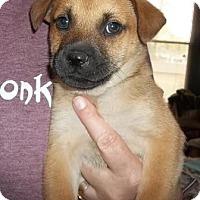Adopt A Pet :: Marmutt - Memphis, TN