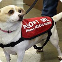 Adopt A Pet :: Mocha - Oakley, CA