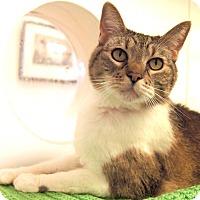 Adopt A Pet :: Sybil - Colorado Springs, CO
