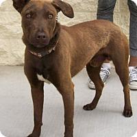 Adopt A Pet :: Roo - Palmdale, CA