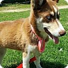 Adopt A Pet :: Kiera