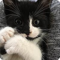 Adopt A Pet :: Cookie - River Edge, NJ