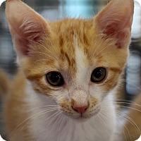 Adopt A Pet :: Liam - Sarasota, FL