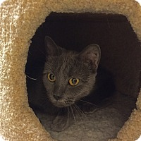 Adopt A Pet :: Mila - Salem, NH