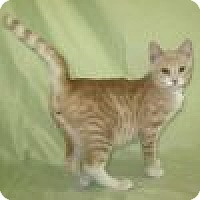 Adopt A Pet :: Barnabus - Powell, OH