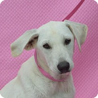 Adopt A Pet :: **WINDY** MEET AUG 27TH! - Mukwonago, WI
